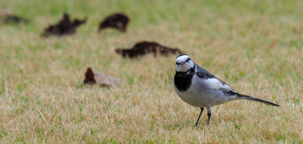 身近な野鳥の楽しみ方