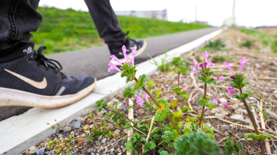 【保存版】散歩が絶対楽しくなる自然散策のススメ!
