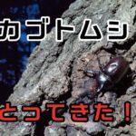 カブトムシはどこにいる?雑木林の樹液を探してみたよ!