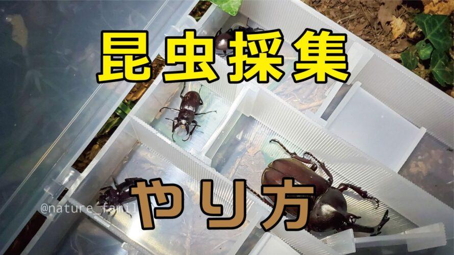【保存版】親子で昆虫採集の楽しみ方まとめ!やり方、道具、場所、服装!