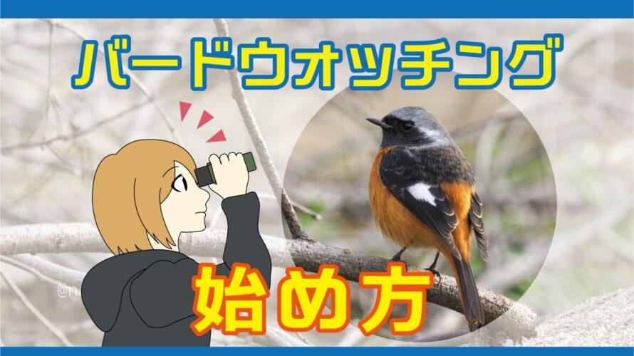 バードウォッチングの始め方!野鳥観察講師が教える鳥の見方や楽しみ方!