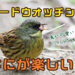 バードウォッチングって何が楽しい?野鳥観察歴15年が語る鳥の魅力